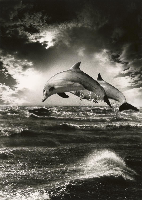 Atlantic Dolphins 16bBr CC
